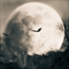 girl-in-the-moon